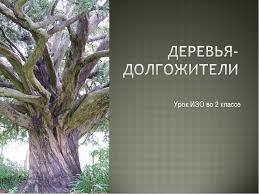 Презентация к уроку изо класс quot Деревья долгожители quot  Урок ИЗО во 2 классе