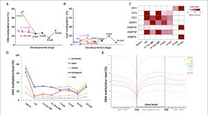 Methylome Dynamics During Bovine Pre Implantation Embryonic