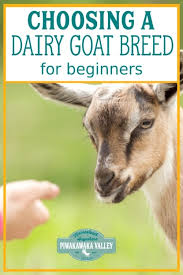 Dairy Goat Breeds The Best Dairy Goat Breeds For Beginners