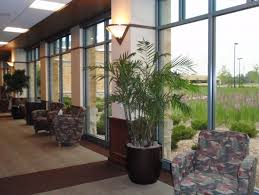 tropical office plants. Not Just House Plants, The Interior Plants We Use Include Palms And Other Tropical That Clean Air, Plus Indoor Trees Of Office