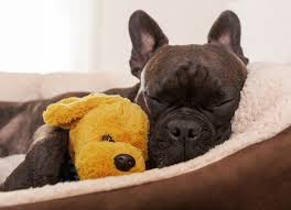 can dogs be allergic to their beds petmd