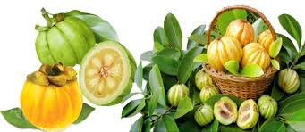 Buyers of Garcinia Cambogia Extract get an expected weight loss in just a several months