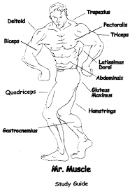 likewise Anatomy coloring pages   Free Coloring Pages together with Kidshealth org Immune system  Activity  movie  quiz in addition Immune System Worksheet Free Worksheets Library   Download and in addition Free Worksheets  Human Body Systems   Free Homeschool Deals © furthermore Hygiene and Pets Worksheets For Kids Level 3   Personal Hygiene moreover Immune System Practice Quiz 1   ProProfs Quiz additionally Viral Hijackers   Lesson   TeachEngineering moreover 50 best study images on Pinterest   Health  Human anatomy and in addition The Human Body Facts and Worksheets   KidsKonnect together with Immune System Worksheet   wiildcreative. on immune system worksheet middle school