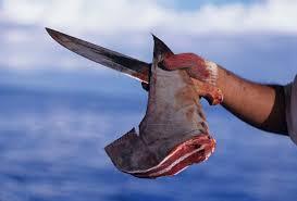 1. Hakarl - Iceland ( Viande de requin séchée et fermentée )