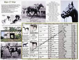 Race Horse Man O War Picture Pedigree Photo Chart One Of