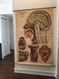 American Frohse Anatomical Charts Key Aj Nystrom Co American Frohse Anatomical Chart Signed By