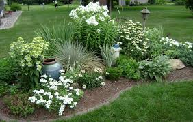 Front yard berm-phlox and Coconut Lime Echinacea.