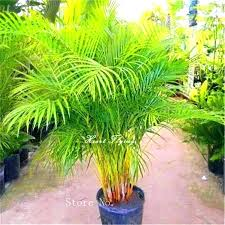 artificial palm trees indoor palm tree plants large artificial indoor palm trees artificial palm trees