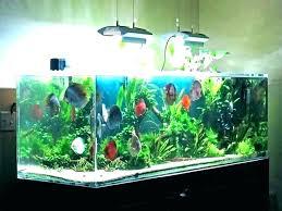 s diy goldfish tank decorations decor gold