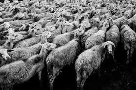 羊ヒツジ Gahag 著作権フリー写真イラスト素材集