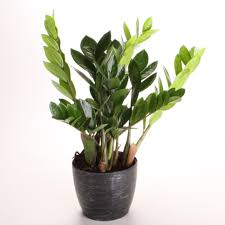 office plants no light. Modren Office In Office Plants No Light HGTVcom