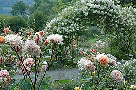 flower gardens pictures. Flower Garden Gardens Pictures R