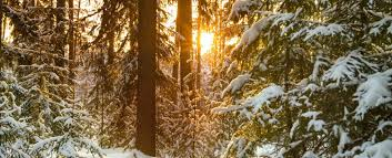 As roadside stops increased in the area, so did the bustle, attracting travelers who were taken by the lake's beauty and wealth of activities. We Know The Best Things To Do In North Lake Tahoe In December Tahoe Moon Properties