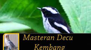 Burung anis kembang masuk ke dalam jenis burung monomorfik, dimana antara jantan dan betina hampir sama secara fisik. Super Decu Gacor Pikat Junior Langsung Berhasil By Seribu Kicau