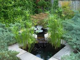 Small Picture 901 best Plantas images on Pinterest Nature Japanese gardens