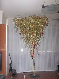 Christmas Trees Tradition And Meaning At Holiday InsightsWhat Kind Of Christmas Trees Are There