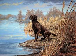 chocolate lab duck. Delighful Duck Chocolate Lab For Duck N