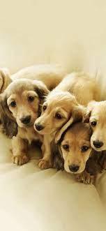 Dog wallpaper iphone ...