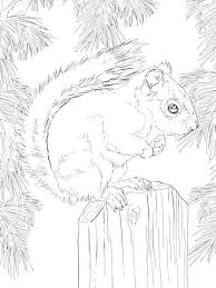 Squirrel Coloring Pages Royaltyhairstorecom