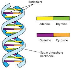 Nucleic Acid Classification Lesson 0972 Tqa Explorer