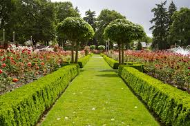 lush green international rose garden portland