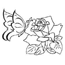 erfly on rose coloring sheets erfly on rose
