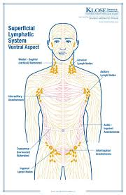 Pin On Lympathatic System