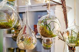 hanging glass bubble terrarium air plants container pots for indoor garden house design ideas