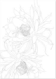 夏の花月下美人の花の無料イラスト大人の塗り絵フリー素材 無料