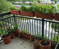 apartment vegetable garden. Interesting Garden If Your Balcony Gets Enough Sun You Can Grow All Sorts Of Vegetables In  Containers To Apartment Vegetable Garden T