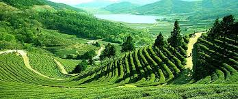 Image result for Singla in darjeeling