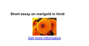short essay on marigold in hindi google docs
