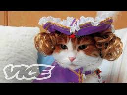 cute kittens in costumes. Fine Kittens Cats In Funny Outfits Cute Kittens Costumes 5