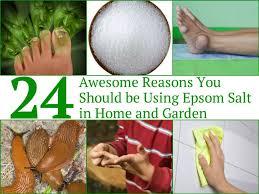 epsom salt for gardening. Boosting Your Garden Results With Epsom Salts . Great Livingino.com Salt For Gardening