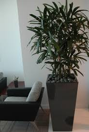 commercial_07 artificial plants for office decor