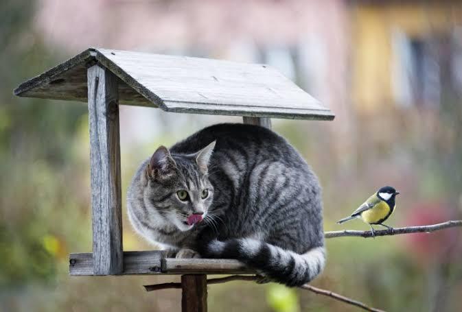 Kuş avlayan kedi