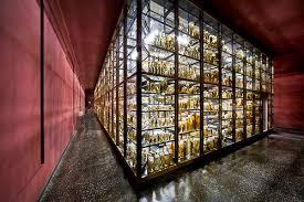 Resultado de imagem para FOTOS DE Berlin Museum of Natural History