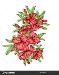 руки Drawn цветы лилии композиции декоративные королевской лилии