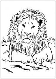 The lion is always called as the king of the jungle, though a lot of majestic huge lions roamed the earth are extinct today. Lion Free Printable Coloring Pages For Kids
