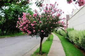 Cada vez que vejo uma árvore florida, parece mesmo que estou diante de um ser iluminado. Arvores Para Calcada 25 Tipos E 50 Imagens Para Se Inspirar