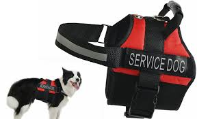 Service Dog Vest Size Chart 12 Best Service Dog Vests And Harnesses 2019 A Reviews