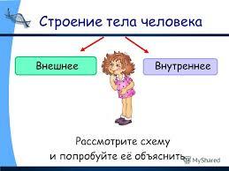 Презентация на тему Строение тела человека Организм человека  2 Строение тела человека Рассмотрите схему и попробуйте её объяснить ВнешнееВнутреннее