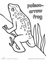 Small Picture Poison Arrow Frog Coloring Page Frogs Arrow and Craft art