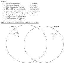 Amdm Venn Diagram Worksheet Answers Mitosis Diagram Meiosis Diagram Worksheet Answers Free Printable