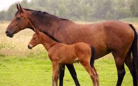 Horse Wallpaper Desktop Animal 210551