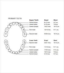 Baby Teeth Chart 8 Free Pdf Documents Download Free