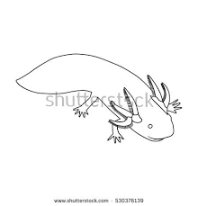 Small Picture Axolotl Illustration Stock Images Royalty Free Images Vectors