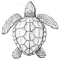 Small Picture 414 best images on Pinterest Turtle pattern Animals
