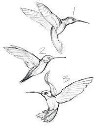 hummingbirds and flowers drawing. Wonderful Hummingbirds Sketches Of Hummingbirds With Flowers  Google Search To Hummingbirds And Flowers Drawing