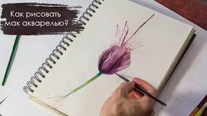 как нарисовать цветы акварелью мак